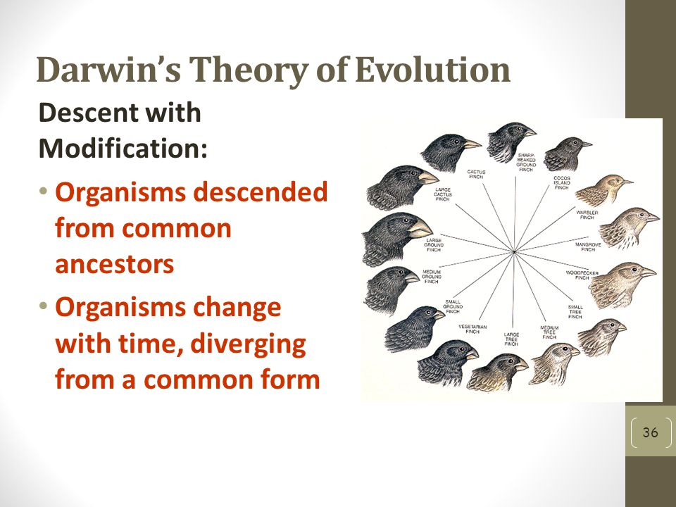 Darwin's Theory of Evolution Descent with Modification: Organisms descended from common ancestors Organisms change with time, diverging from a common form 36