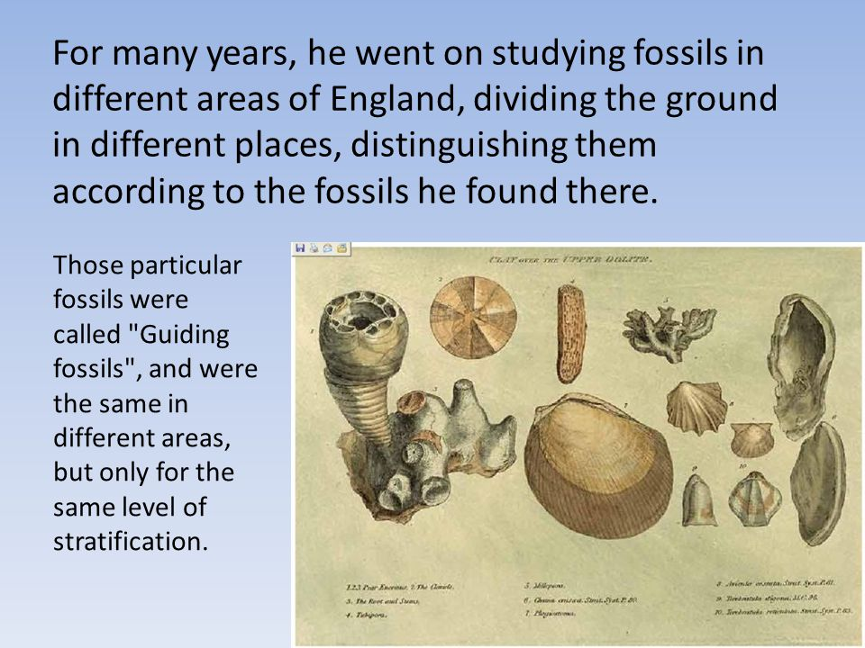 For many years, he went on studying fossils in different areas of England, dividing the ground in different places, distinguishing them according to t