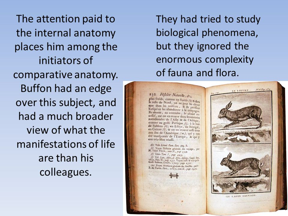 The attention paid to the internal anatomy places him among the initiators of comparative anatomy. Buffon had an edge over this subject, and had a muc