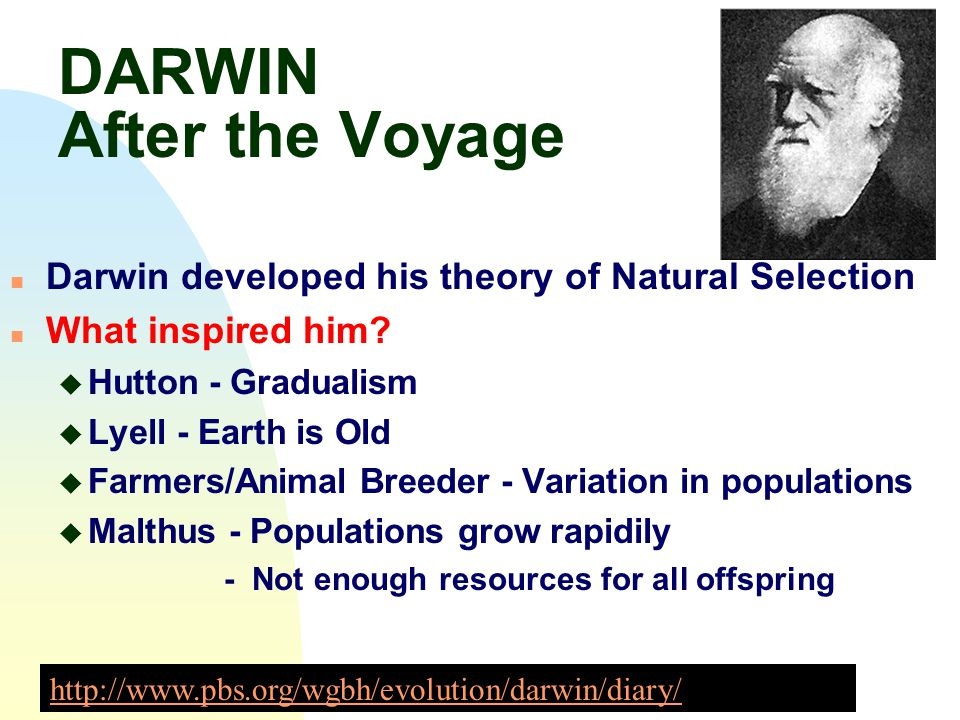 DARWIN After the Voyage n Darwin developed his theory of Natural Selection n What inspired him? u Hutton - Gradualism u Lyell - Earth is Old u Farmers