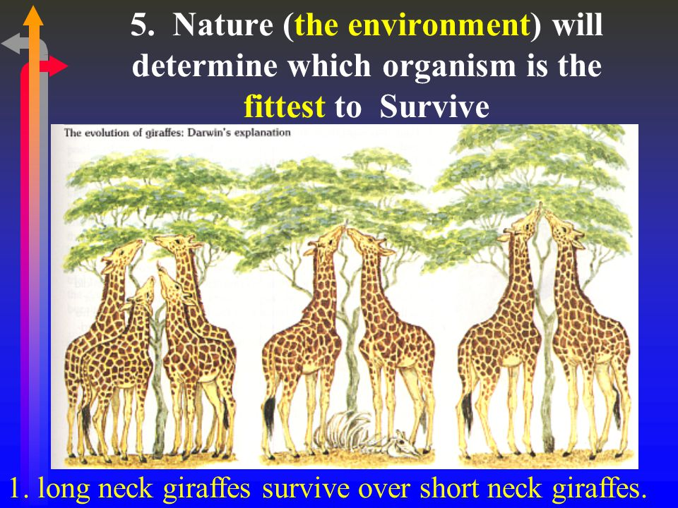 5. Nature (the environment) will determine which organism is the fittest to Survive 1.