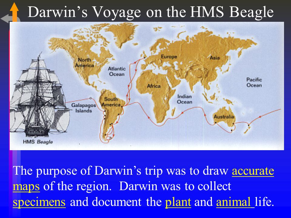 Darwin's Voyage on the HMS Beagle The purpose of Darwin's trip was to draw accurate maps of the region.