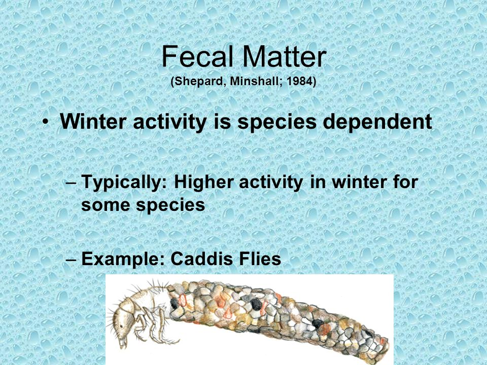Fecal Matter (Shepard, Minshall; 1984) Winter activity is species dependent –Typically: Higher activity in winter for some species –Example: Caddis Flies