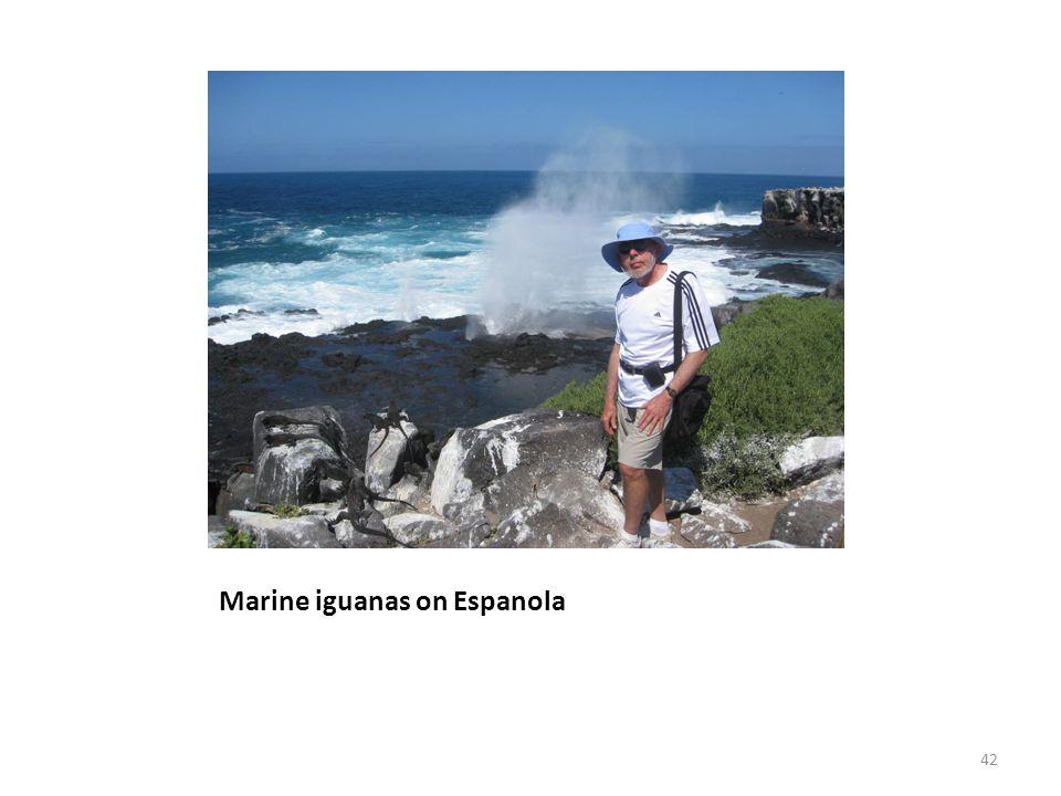 Marine iguanas on Espanola 42