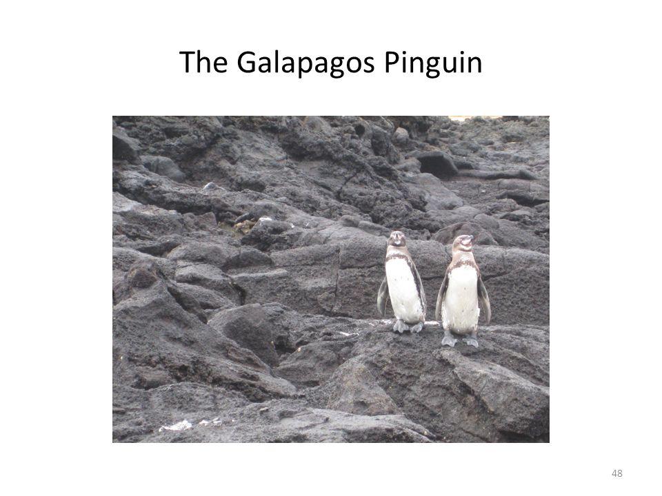 The Galapagos Pinguin 48