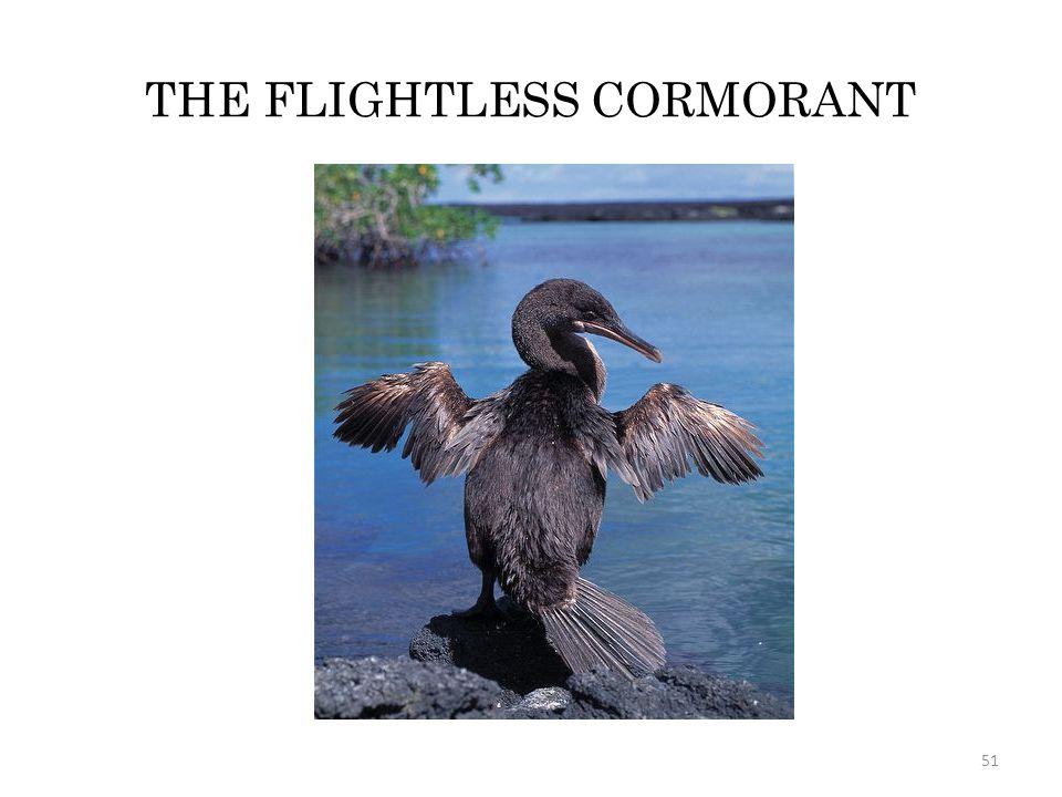 THE FLIGHTLESS CORMORANT 51