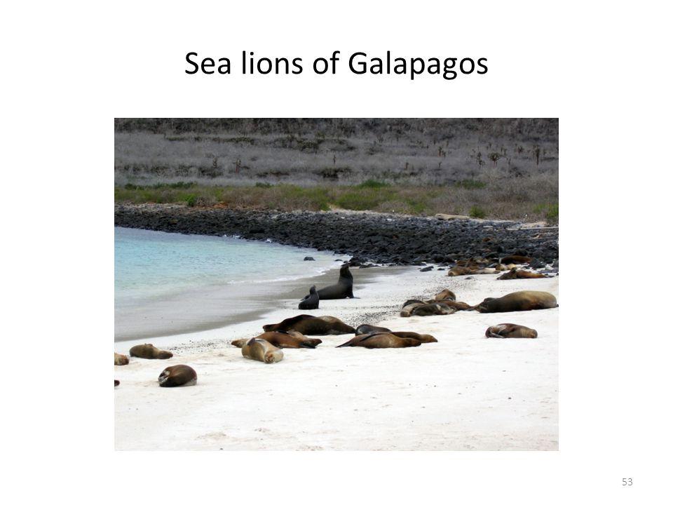Sea lions of Galapagos 53