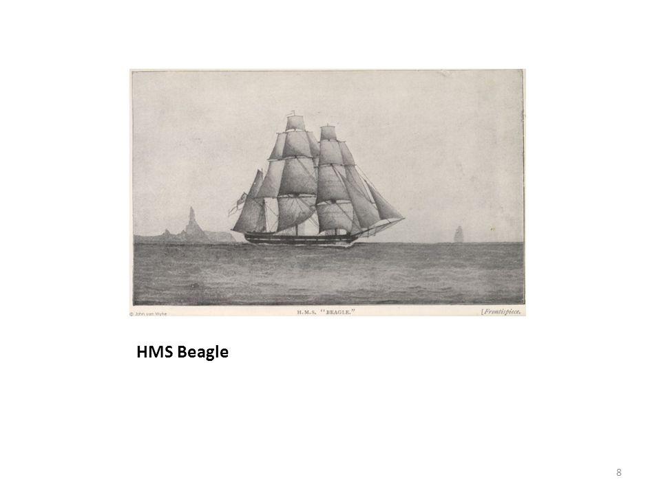 HMS Beagle 8