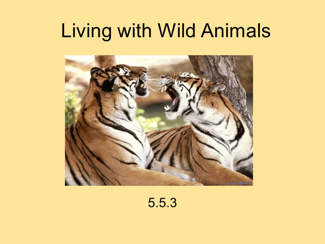 Living with Wild Animals 5.5.3