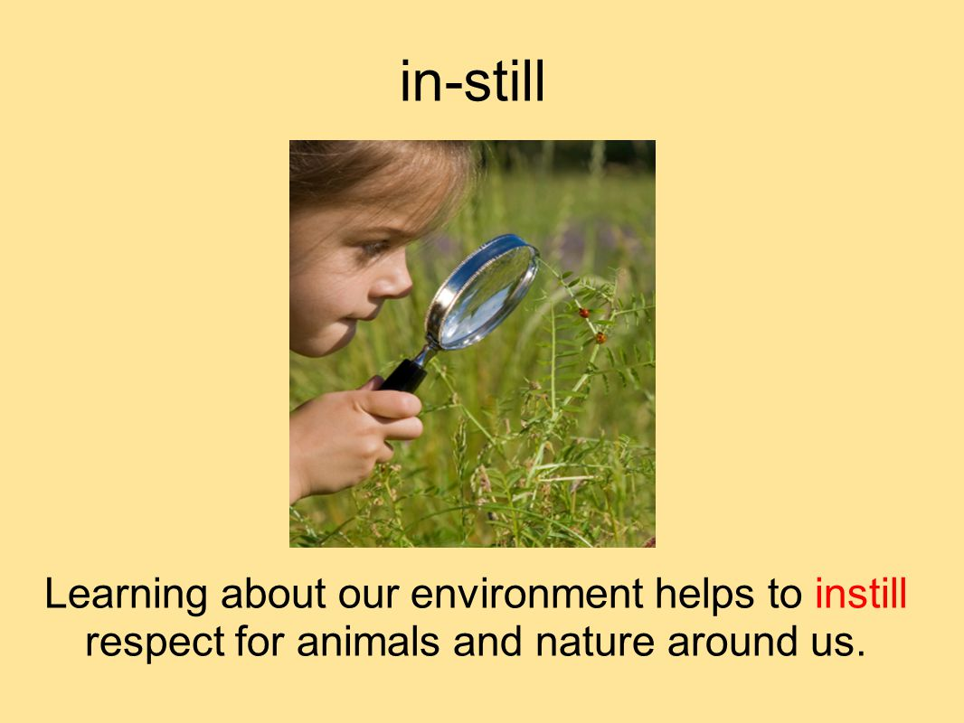 in-still Learning about our environment helps to instill respect for animals and nature around us.