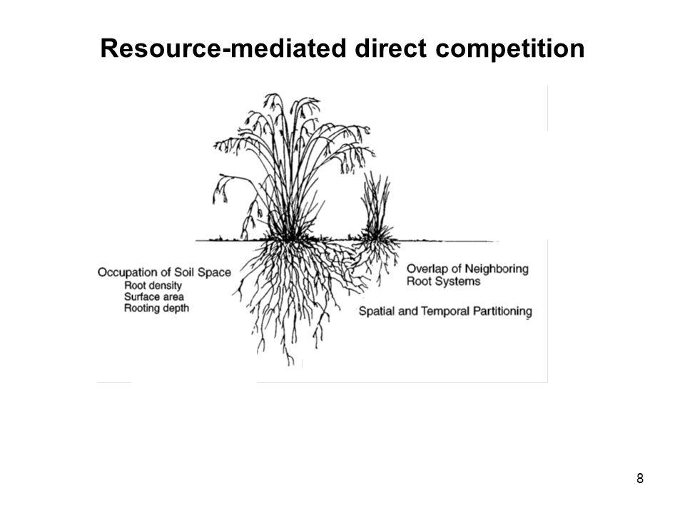 8 Resource-mediated direct competition