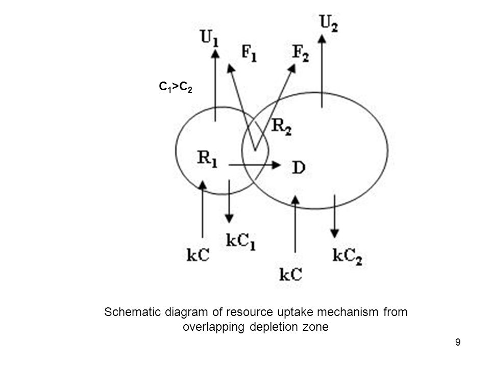 9 C 1 >C 2 Schematic diagram of resource uptake mechanism from overlapping depletion zone