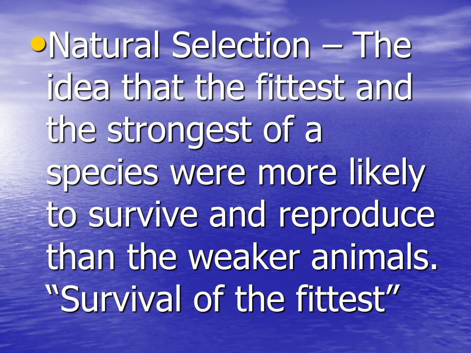 Natural Selection – The idea that the fittest and the strongest of a species were more likely to survive and reproduce than the weaker animals.