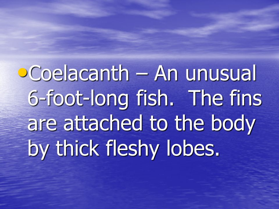 Coelacanth – An unusual 6-foot-long fish.The fins are attached to the body by thick fleshy lobes.