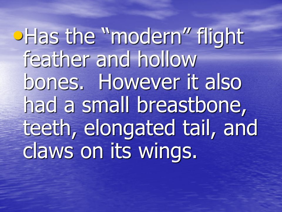 Has the modern flight feather and hollow bones.