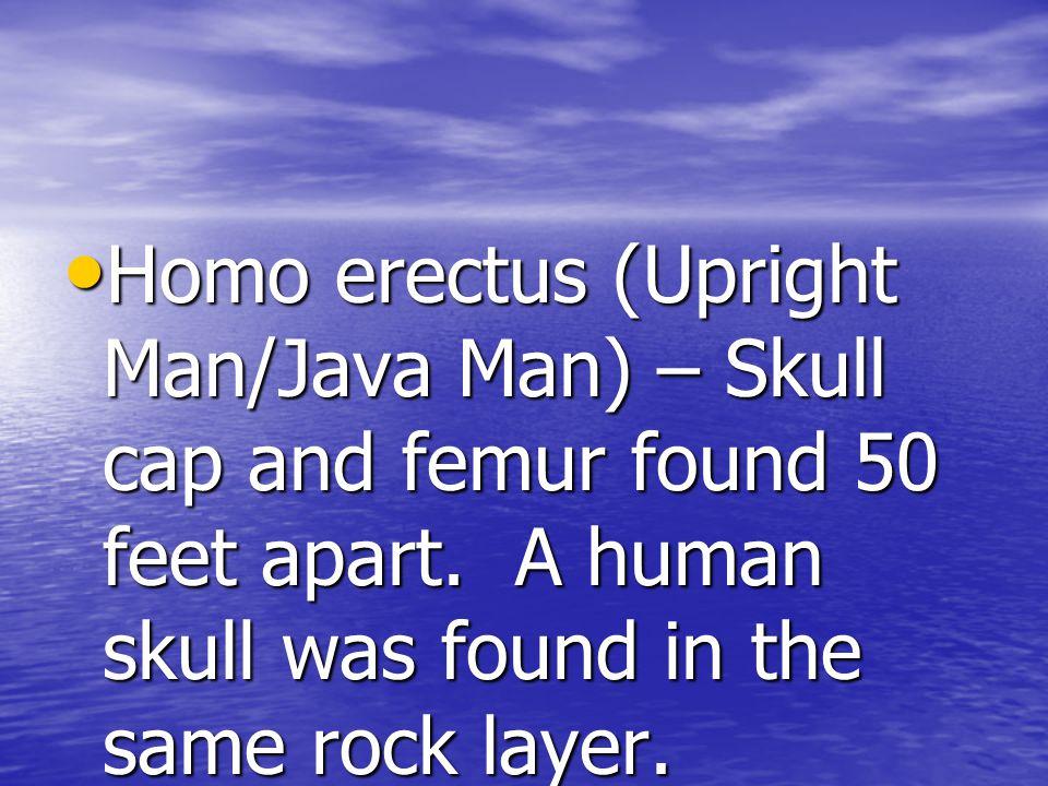 Homo erectus (Upright Man/Java Man) – Skull cap and femur found 50 feet apart.