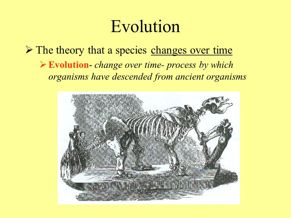 Evolution TT he theory that a species changes over time EE volution- change over time- process by which organisms have descended from ancient orga