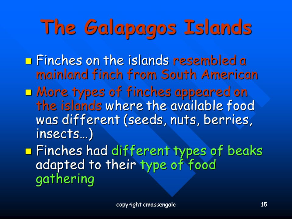 15 The Galapagos Islands Finches on the islands resembled a mainland finch from South American Finches on the islands resembled a mainland finch from