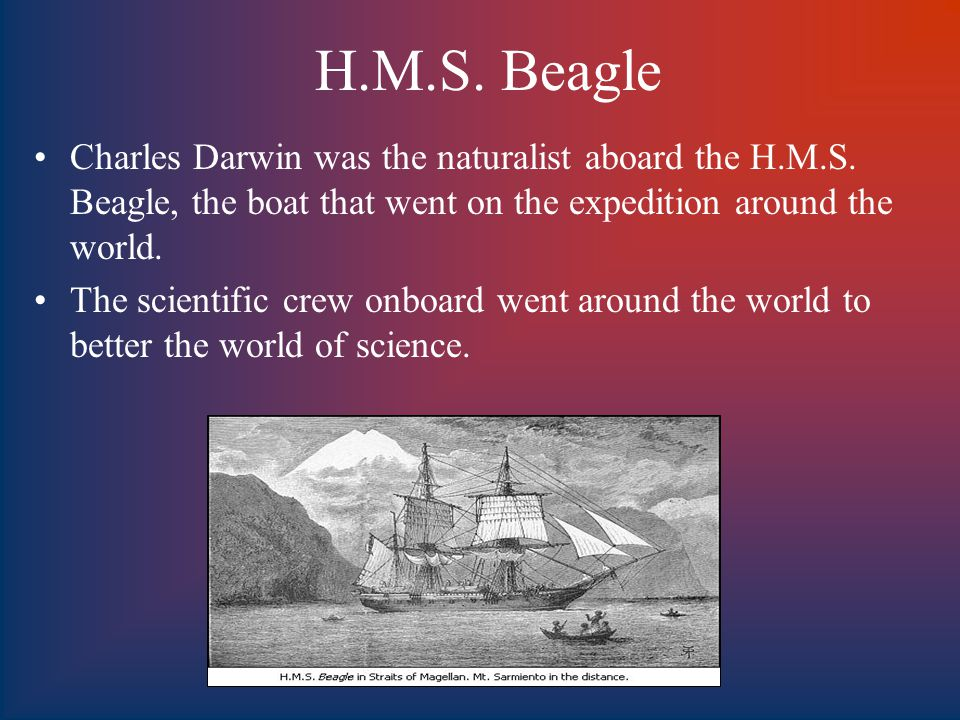 H.M.S. Beagle Charles Darwin was the naturalist aboard the H.M.S.