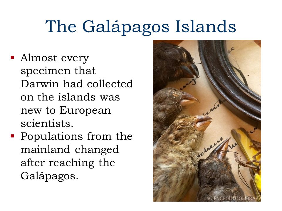 The Galápagos Islands  Almost every specimen that Darwin had collected on the islands was new to European scientists.
