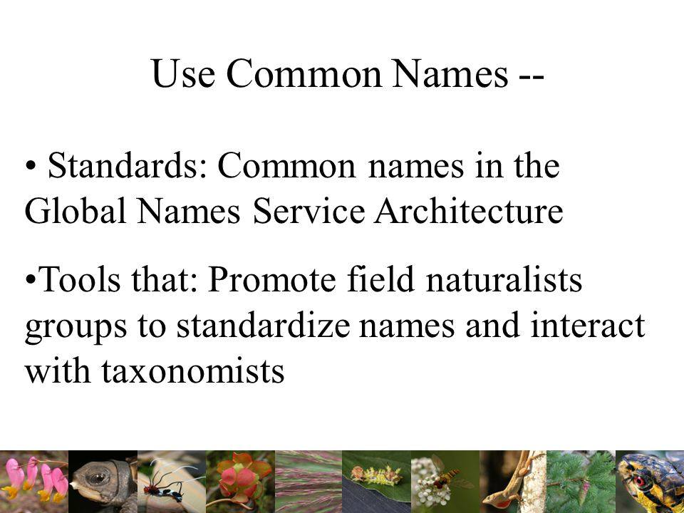 Use Common Names -- Standards: Common names in the Global Names Service Architecture Tools that: Promote field naturalists groups to standardize names and interact with taxonomists