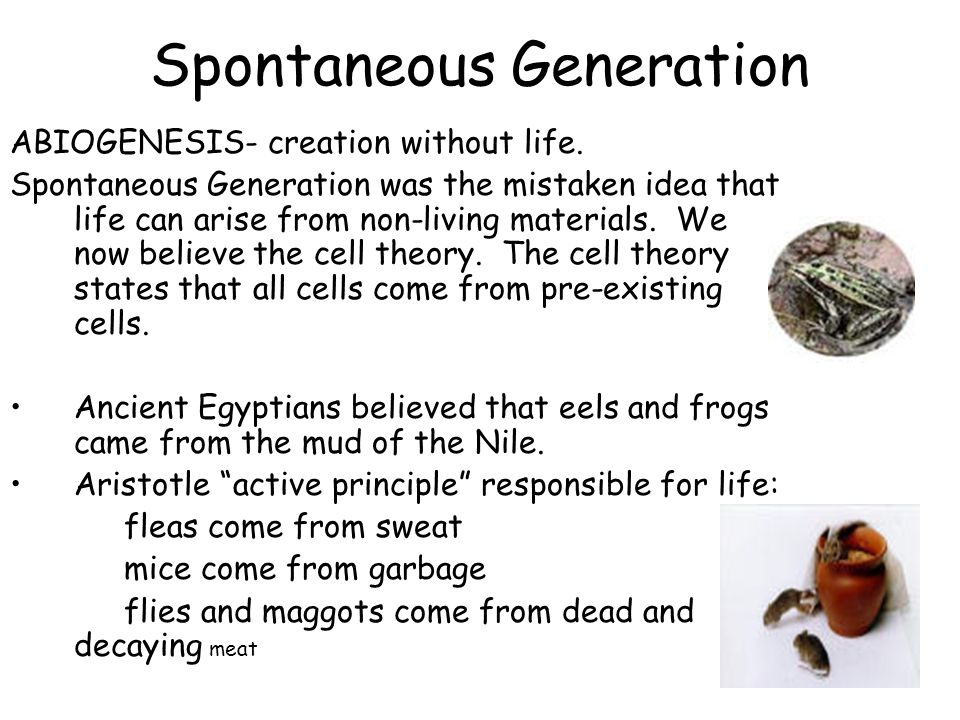 Origins of Life Early Theories on How Life Began: Spontaneous Generation and Scientific Experiments