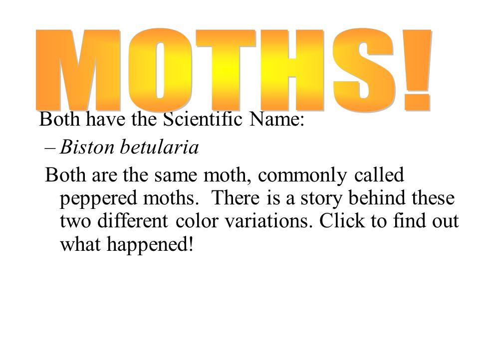 Write similarities and differences between these two organisms!
