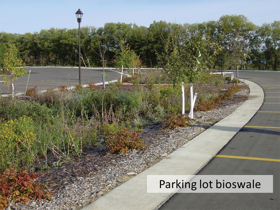 Parking lot bioswale