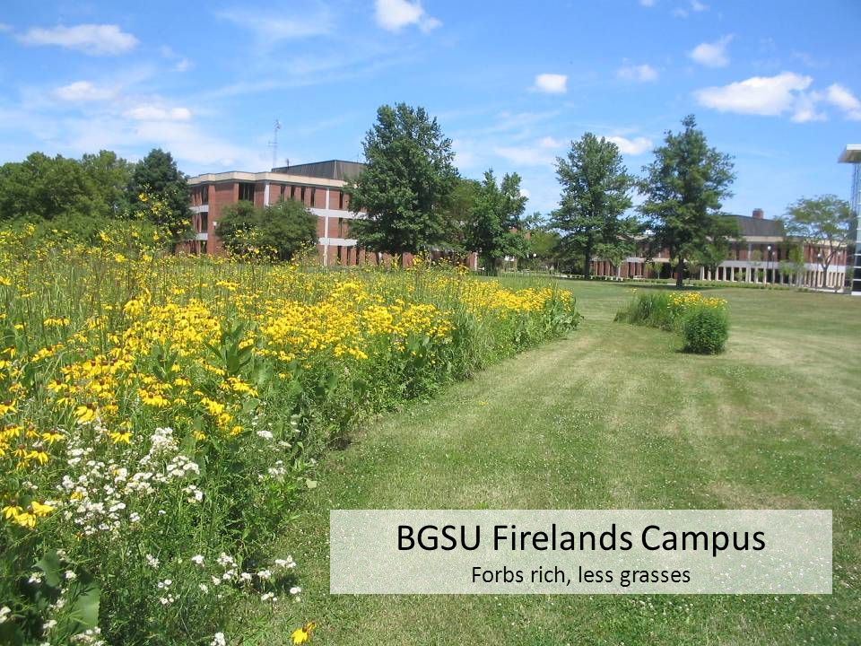 BGSU Firelands Campus Forbs rich, less grasses