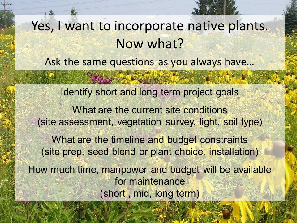 Yes, I want to incorporate native plants. Now what.