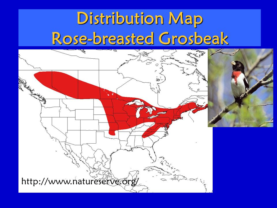 Distribution Map Rose-breasted Grosbeak http://www.natureserve.org/