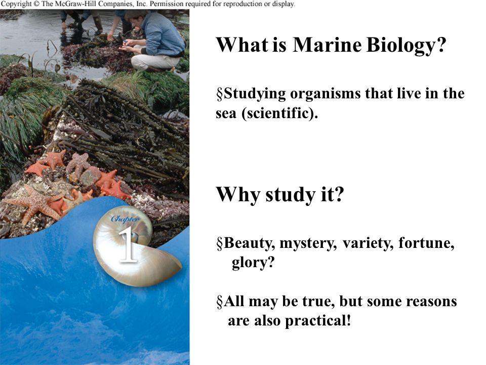 What is Marine Biology. §Studying organisms that live in the sea (scientific).