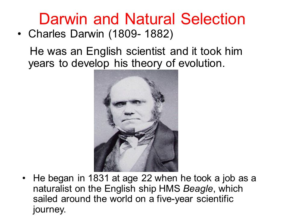 Darwin and Natural Selection Charles Darwin (1809- 1882) He was an English scientist and it took him years to develop his theory of evolution.