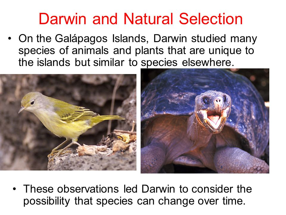 Section 15.1 Summary – pages 393-403 On the Galápagos Islands, Darwin studied many species of animals and plants that are unique to the islands but similar to species elsewhere.