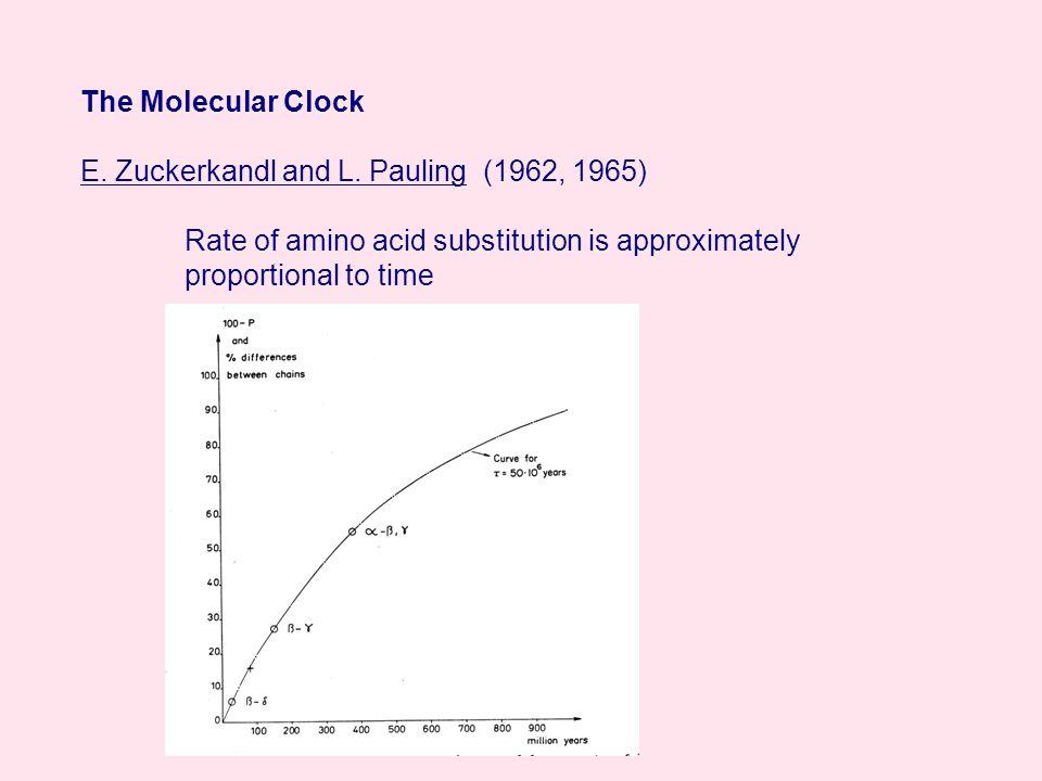 The Molecular Clock E. Zuckerkandl and L.