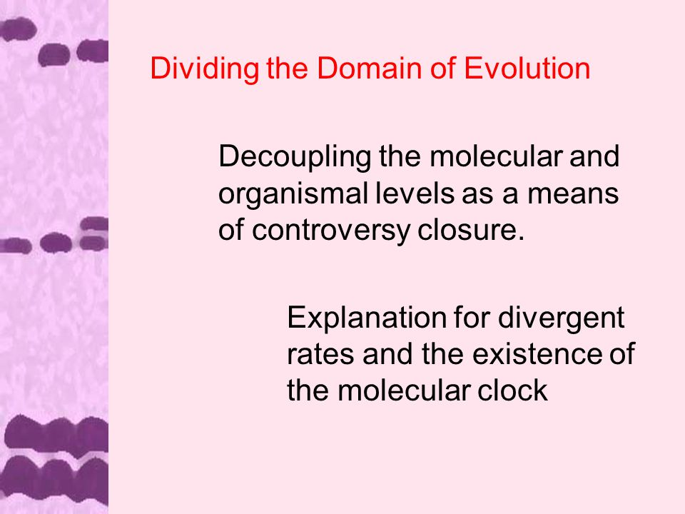 Dividing the Domain of Evolution Decoupling the molecular and organismal levels as a means of controversy closure.