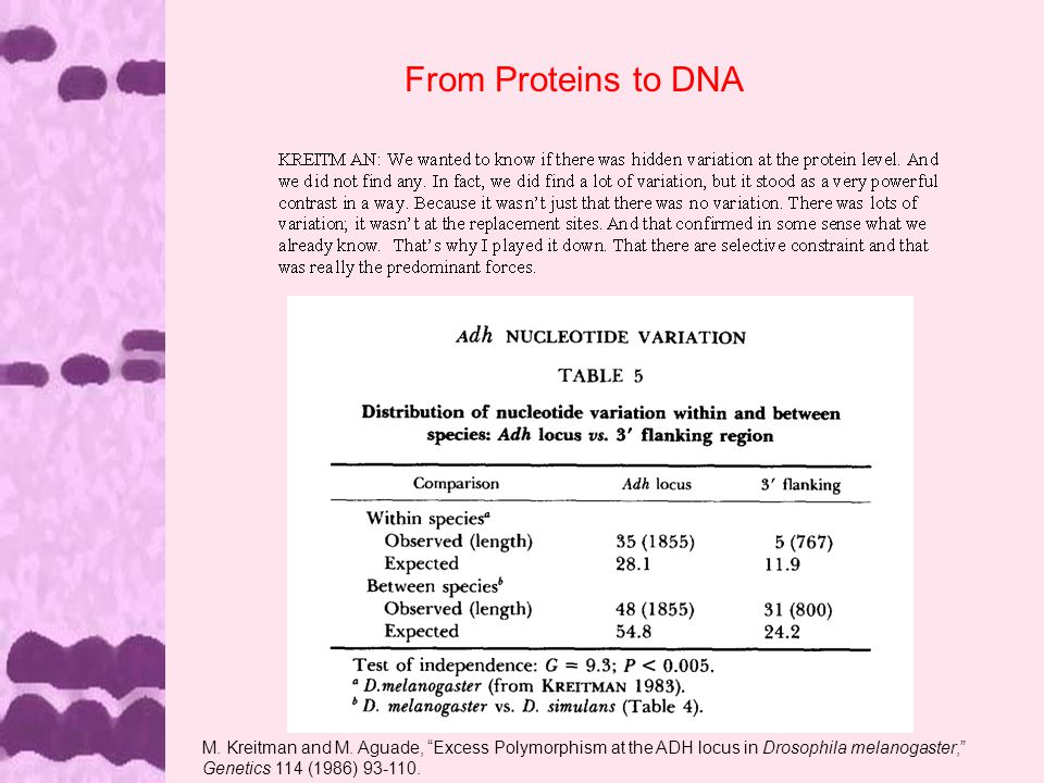 From Proteins to DNA M. Kreitman and M.