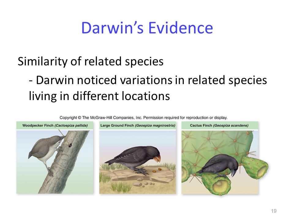 Darwin's Evidence Similarity of related species - Darwin noticed variations in related species living in different locations 19