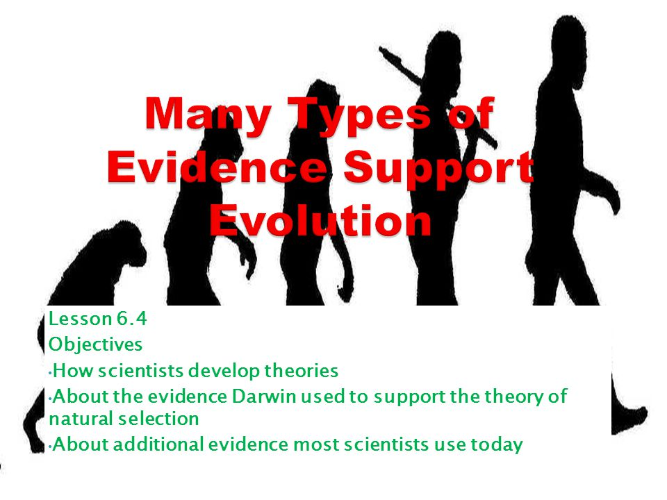Lesson 6.4 Objectives How scientists develop theories About the evidence Darwin used to support the theory of natural selection About additional evide