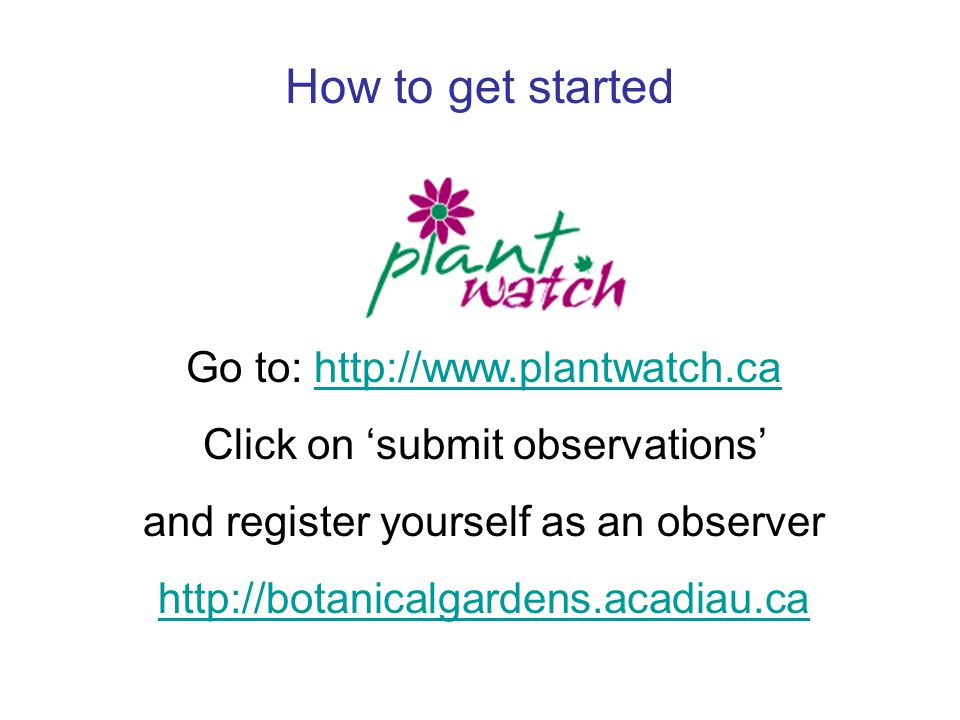 How to get started Go to: http://www.plantwatch.cahttp://www.plantwatch.ca Click on 'submit observations' and register yourself as an observer http://botanicalgardens.acadiau.ca