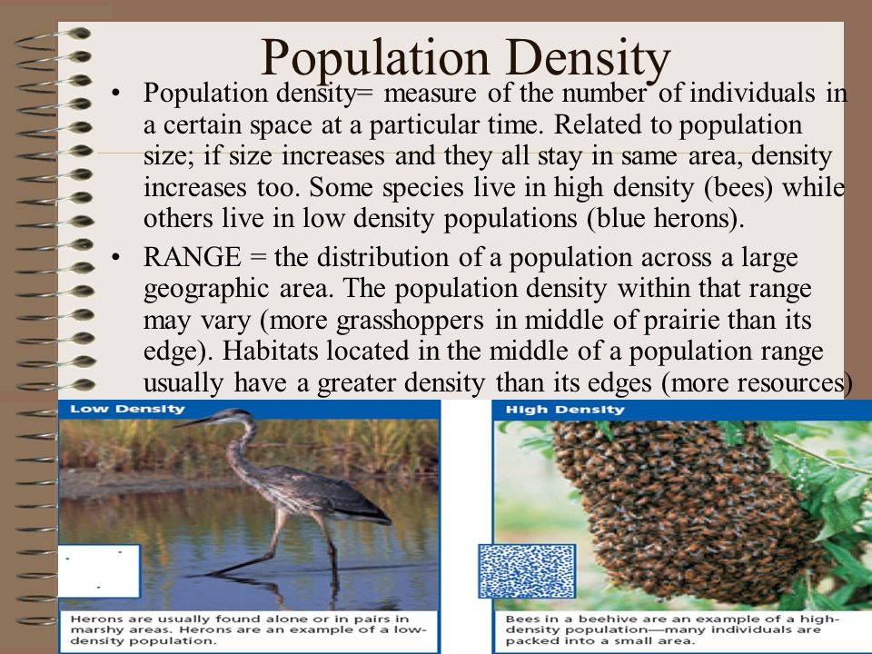 Population Density Population density= measure of the number of individuals in a certain space at a particular time. Related to population size; if si