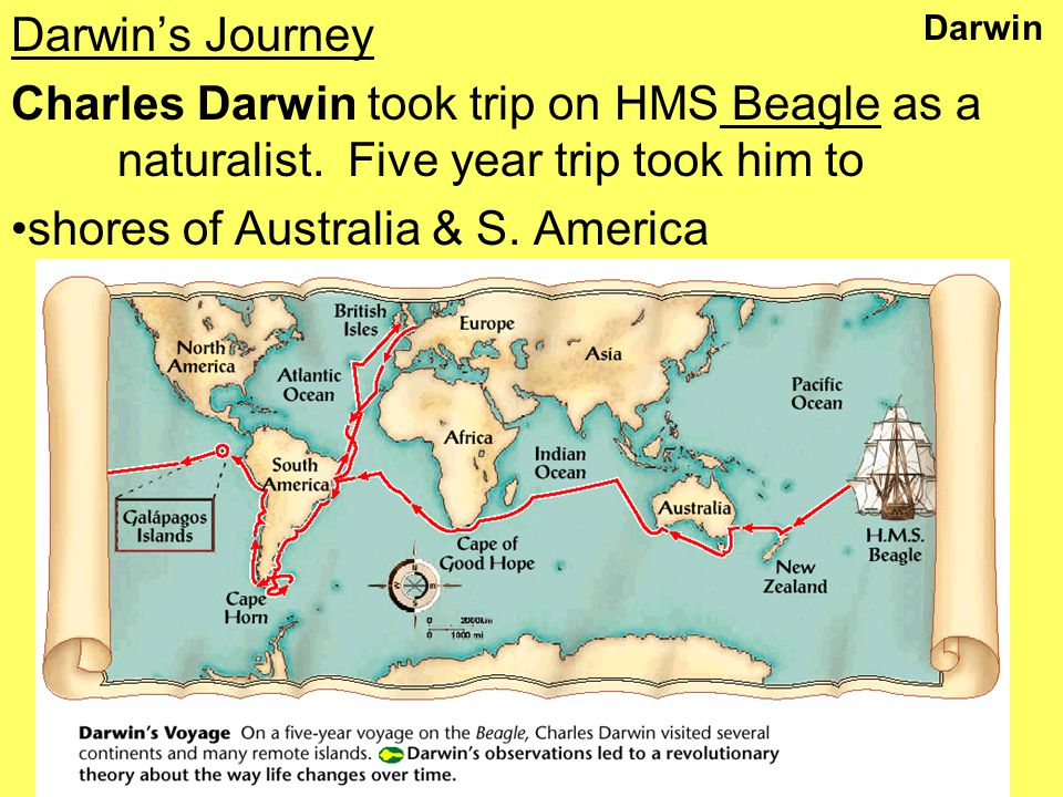 Darwin Darwin's Journey Charles Darwin took trip on HMS Beagle as a naturalist.