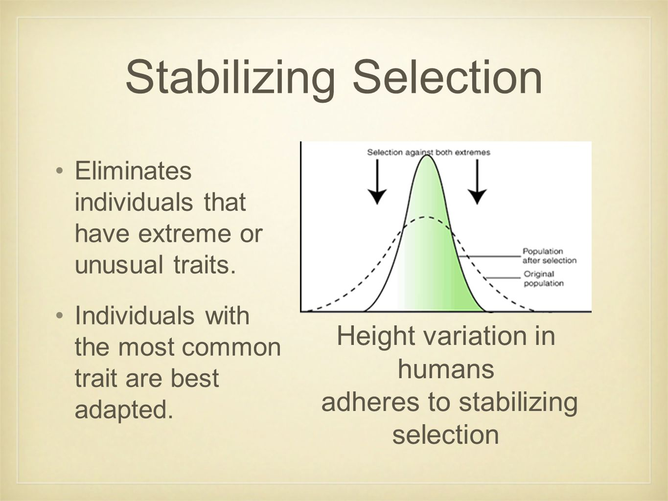 Stabilizing Selection Eliminates individuals that have extreme or unusual traits. Individuals with the most common trait are best adapted. Height vari