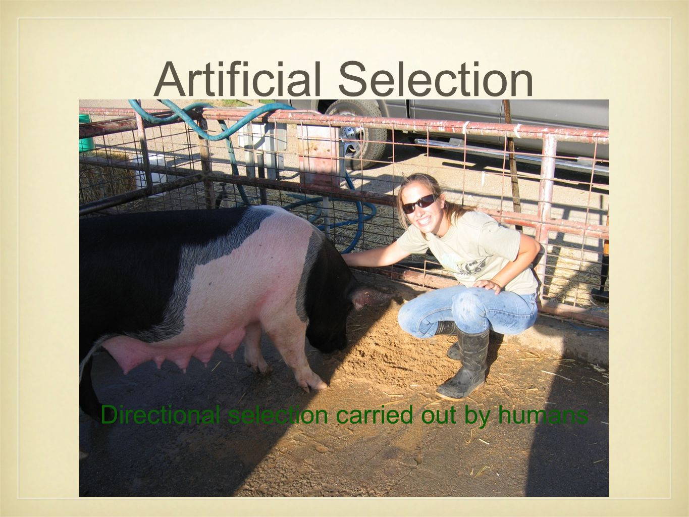 Artificial Selection Directional selection carried out by humans
