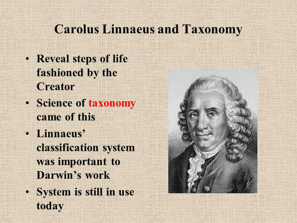 Carolus Linnaeus and Taxonomy Reveal steps of life fashioned by the Creator Science of taxonomy came of this Linnaeus' classification system was important to Darwin's work System is still in use today