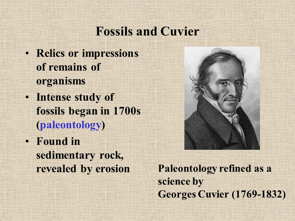 Fossils and Cuvier Relics or impressions of remains of organisms Intense study of fossils began in 1700s (paleontology) Found in sedimentary rock, revealed by erosion Paleontology refined as a science by Georges Cuvier (1769-1832)