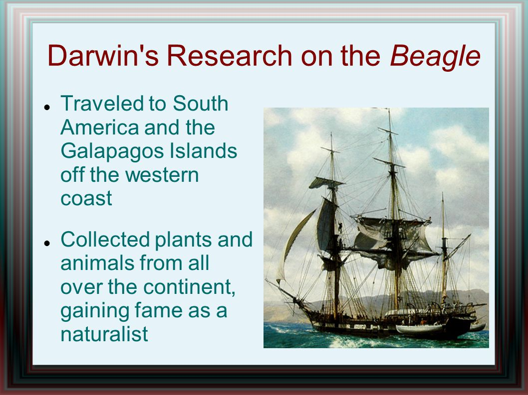 Darwin's Research on the Beagle Traveled to South America and the Galapagos Islands off the western coast Collected plants and animals from all over t