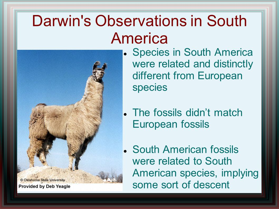Darwin s Observations in South America Species in South America were related and distinctly different from European species The fossils didn't match European fossils South American fossils were related to South American species, implying some sort of descent