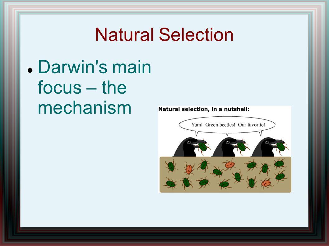 Natural Selection Darwin s main focus – the mechanism