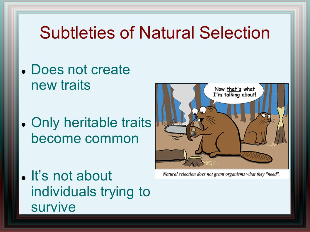 Subtleties of Natural Selection Does not create new traits Only heritable traits become common It's not about individuals trying to survive